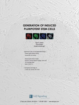 Stem_cell_WP_300x400