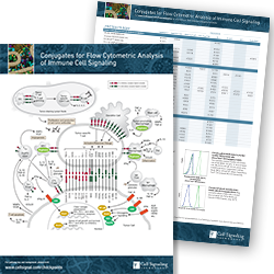 Conjugates for Flow Cytometric Analysis of Immune Cell Signaling Pathway