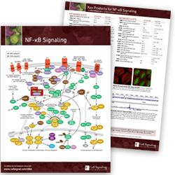NF-kB Signaling