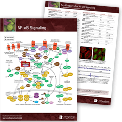 NF-κB Signaling Pathway