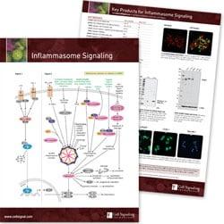 Inflammasome Signaling Pathway