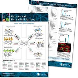 Histones and Histone Modifcations Pathway