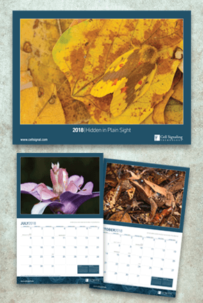 2018 Calendar Email.png