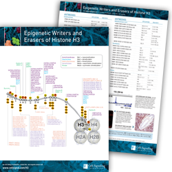 Epigenetic Writers and Erasers of Histone H3 Pathway