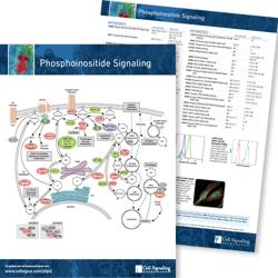 Phosphoinositide Signaling Pathway