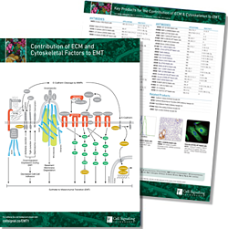 Contribution of ECM and Cytoskeletal Factors to EMT Pathway