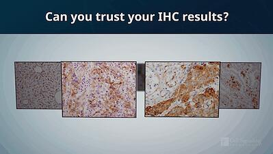 Can you trust your IHC results?