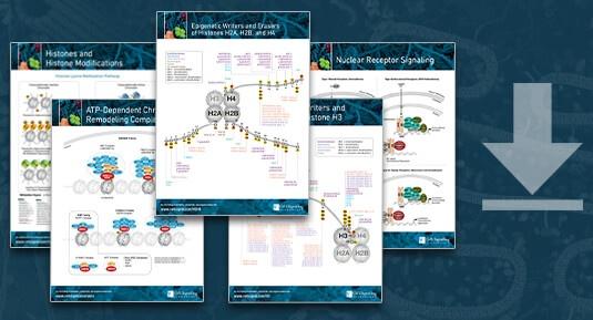 Download Epigenetics Pathways