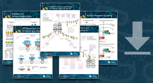 Download Epigenetics Pathways