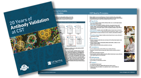validation brochure thumbnail