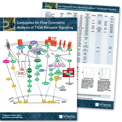 Conjugates for Flow Cytometric Analysis of T-Cell Receptor Signaling Pathway