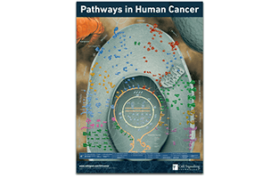 pathways-in-human-cancer-1