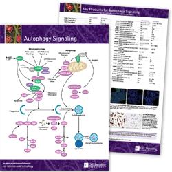 Autophagy Signaling Pathway