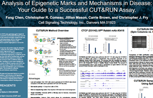 Analysis of Epigenetic Marks and Mechanisms in Disease: Your Guide to Successful CUT&RUN Assay