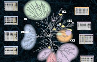Proteomics Resources
