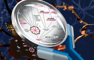 'Deciphering' Webinar Series with Science