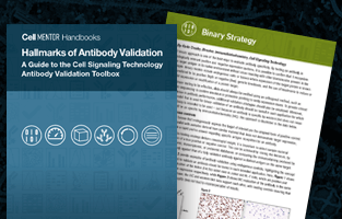 Hallmarks of Validation eBook