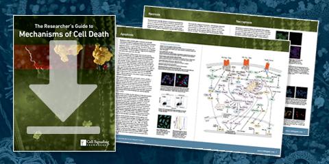下载   细胞死亡电子书