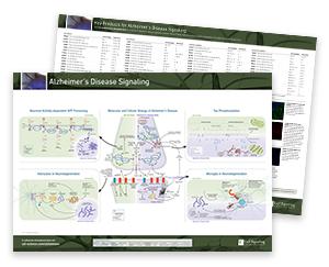Molecular and Cellular Biology of Alzheimer's Diseasee