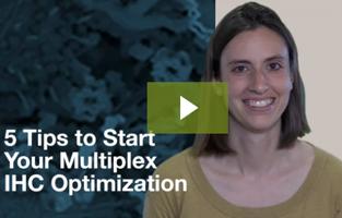 5 Tips to Start Your Multiplex Immunohistochemistry Optimization   CST Tech Tips