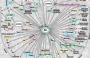 Hallmarks of Cancer Signaling Pathways
